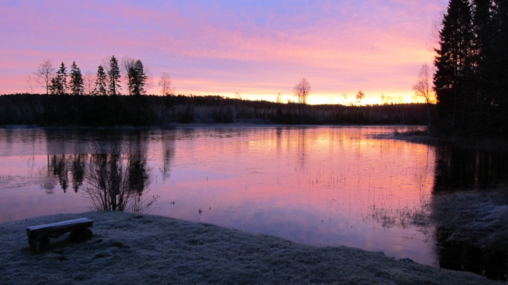 rosa-lys-desembermorgen